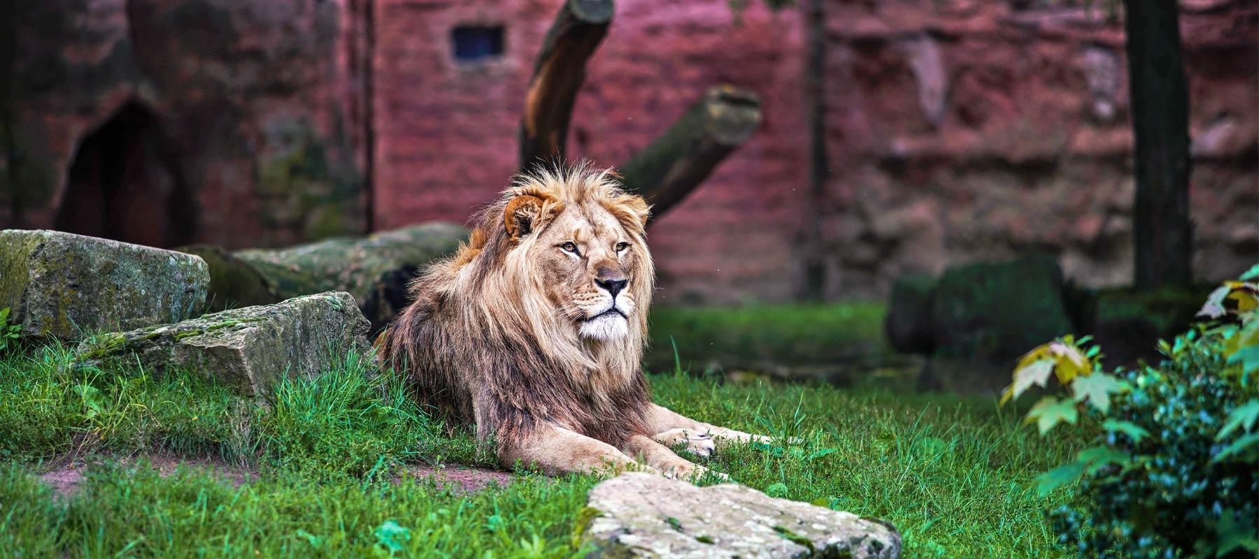 zoo hannover single mit kind