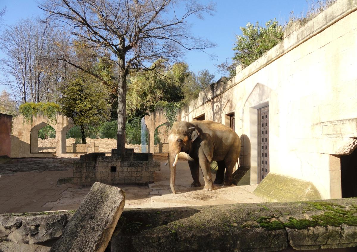 Visualisierung des neuen Bullengeheges im Erlebnis-Zoo