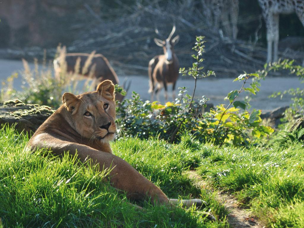 Rabattaktion zoo hannover