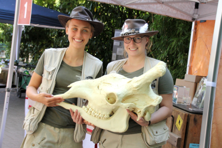 450x300-familienfest-2019-zoo-scouts-mit-giraffenschaedel-erlebnis-zoo-hannover