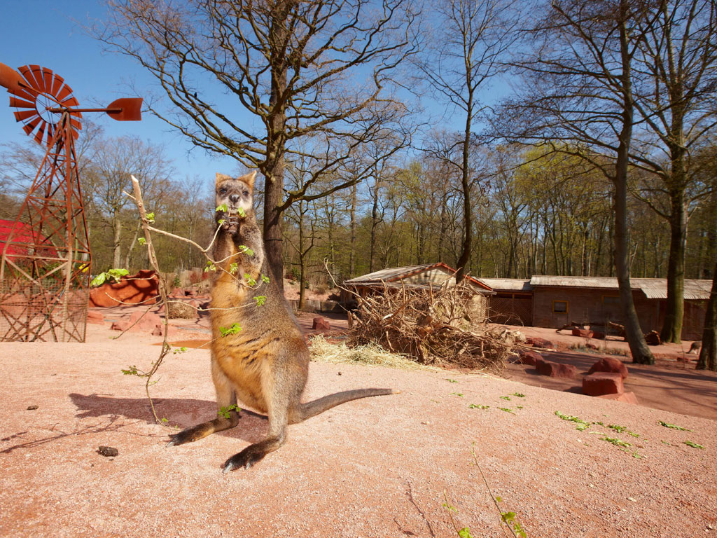 zoo hannover sommer special