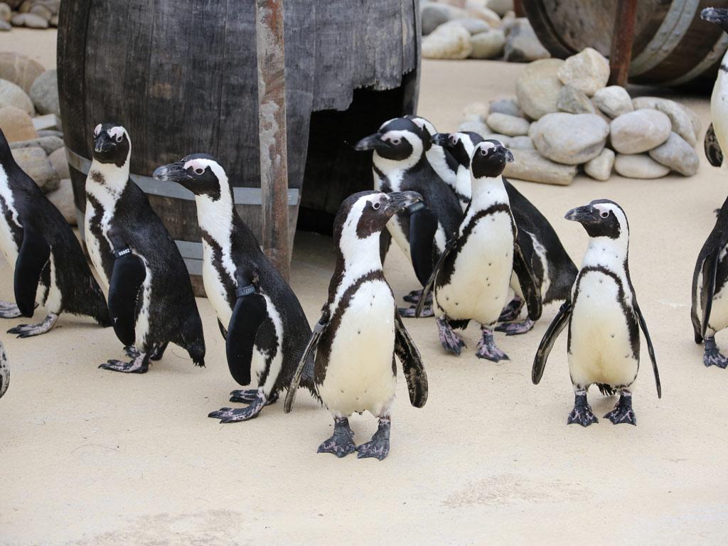 Patenschaft Pinguin