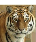 willkommen im erlebnis zoo hannover erlebnis zoo hannover. Black Bedroom Furniture Sets. Home Design Ideas