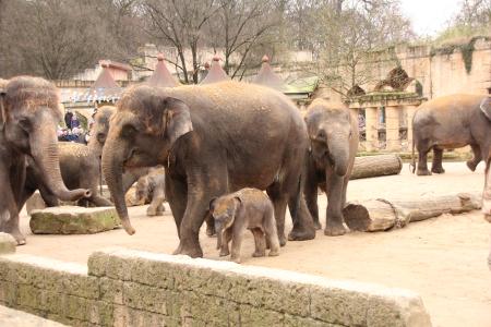 elefantenhaltung und besch ftigungstraining erlebnis zoo. Black Bedroom Furniture Sets. Home Design Ideas