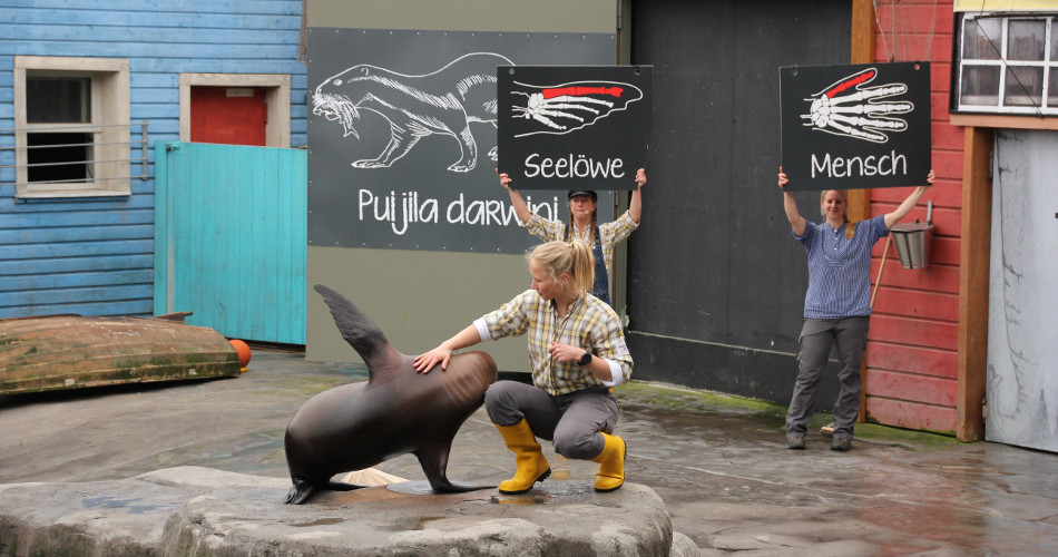 zoo hannover shows