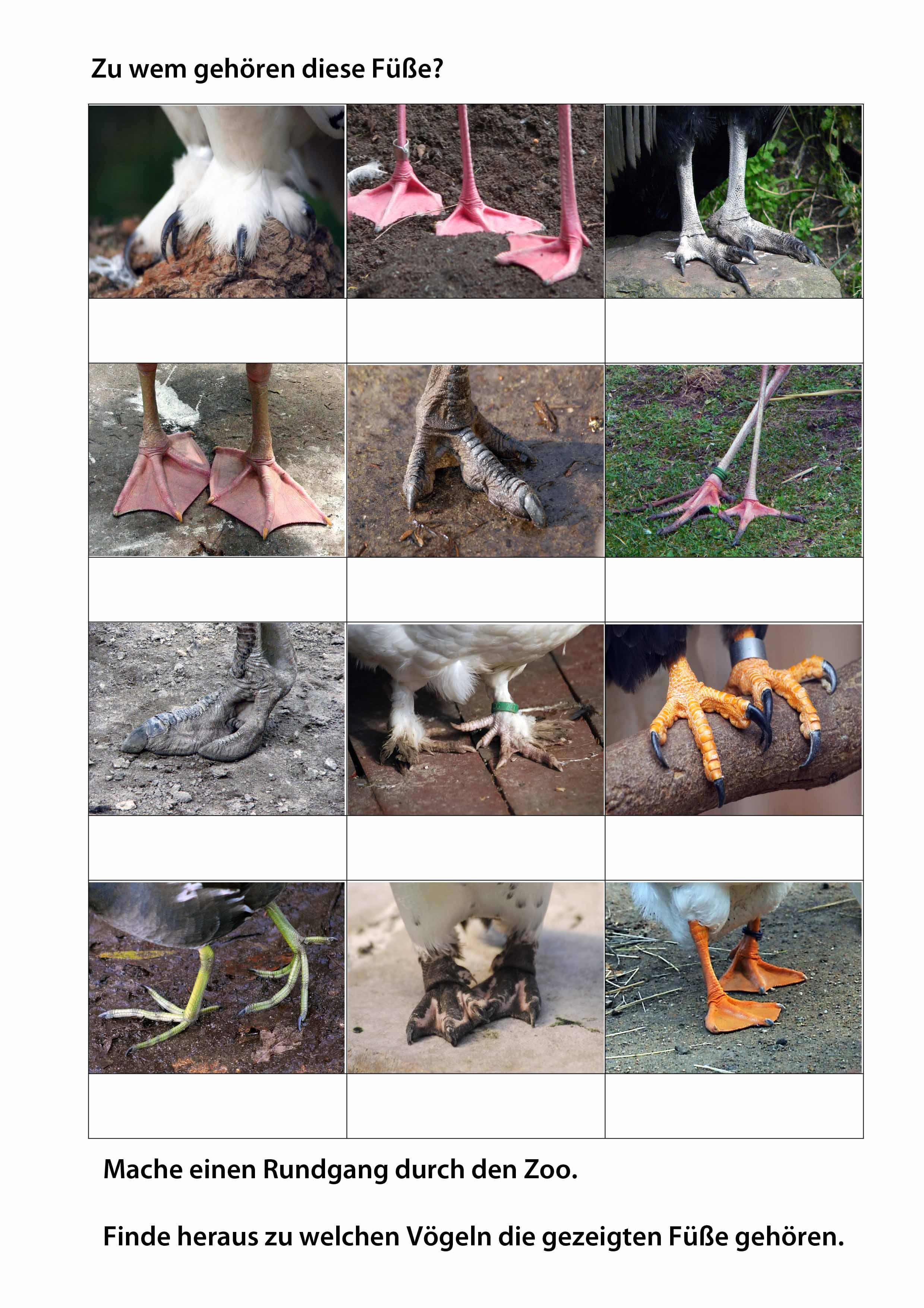 Materialien für Ihren Unterricht | Erlebnis Zoo Hannover