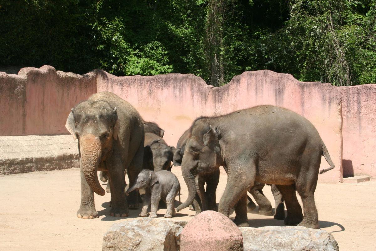 elefanten im erlebnis zoo erlebnis zoo hannover. Black Bedroom Furniture Sets. Home Design Ideas